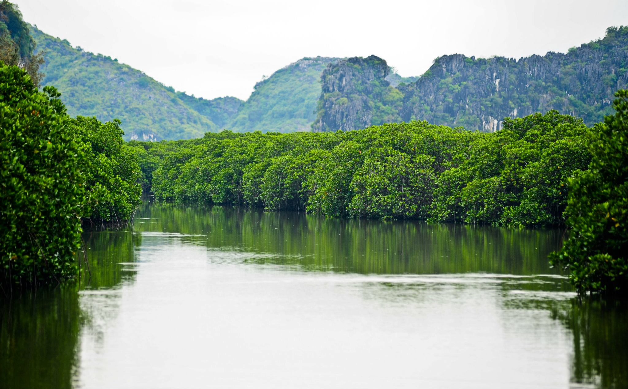 Mangrove Forest in Phu Long, Ecolife Homestay